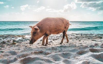 Curaçao, la encantadora isla de curación en Países Bajos